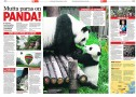 Pandas in China (Ilta-Sanomat) - text by Tea Karvinen