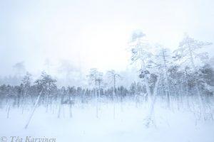 photo of the week 3 – Ounasvaara, Rovaniemi, Finnish Lapland