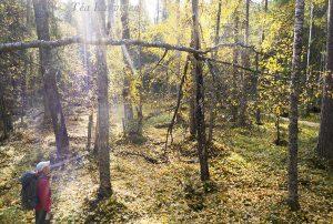 997 – Pyhä-Häkki National Park