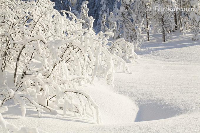 Tiilikkajärvi / winter
