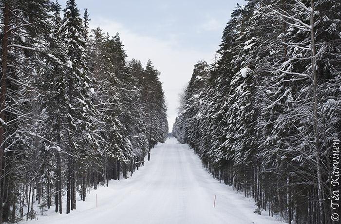 Pyhä-Häkki / winter