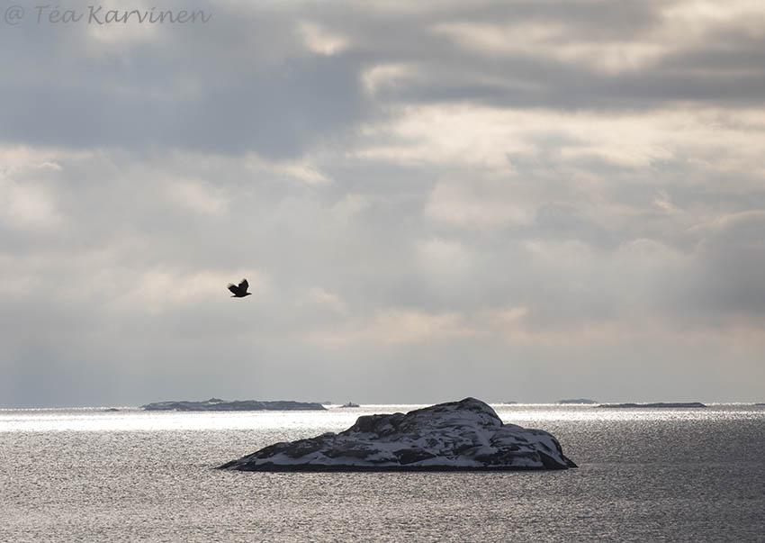Tammisaaren saaristo / winter