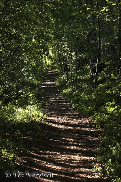 Liesjärvi / summer