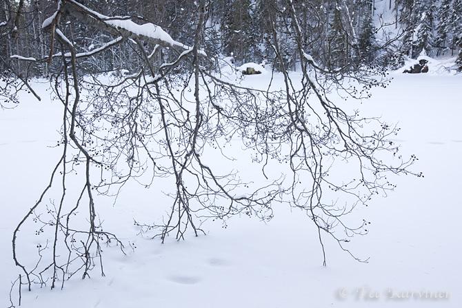 Helvetinjärvi / winter
