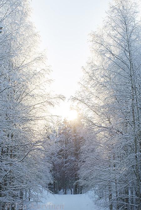 Petkeljärvi / winter