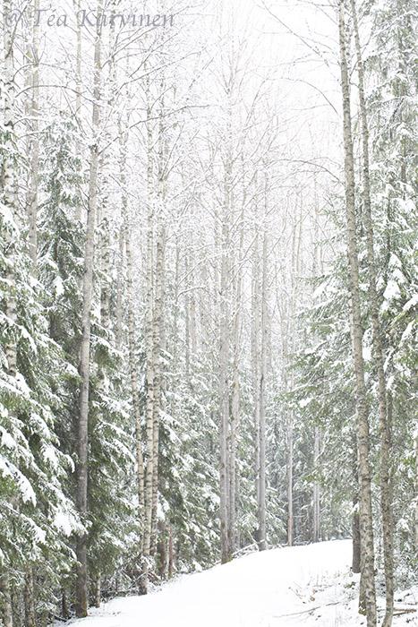 Torronsuo / winter