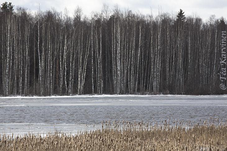Puurijärvi-Isosuo / winter