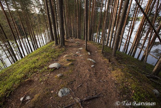 Petkeljärvi / summer