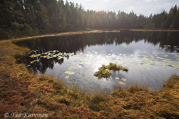 Isojärvi / summer