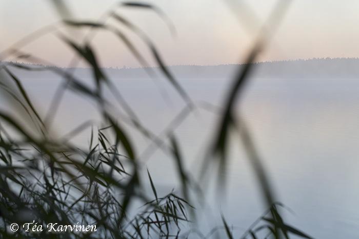 Salamajärvi / summer