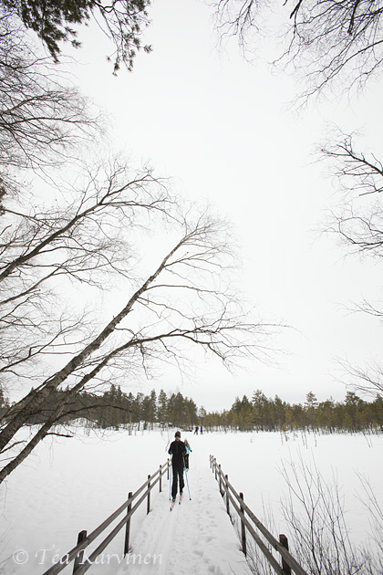 Kurjenrahka / winter
