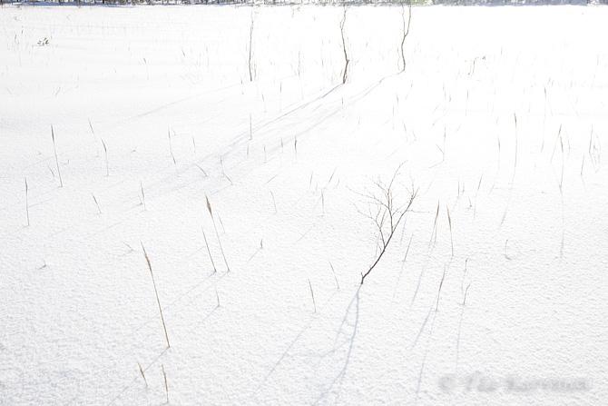 Leivonmäki / winter