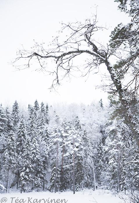 Etelä-Konnevesi / winter