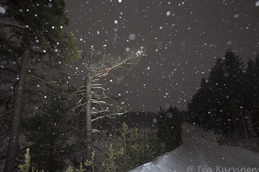 Hossa / winter