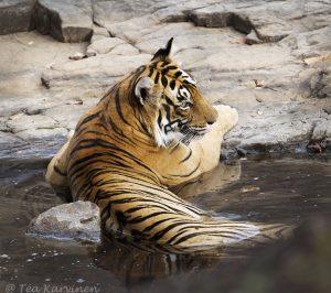 Ranthambhor National Park