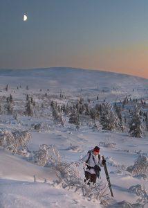 880 – In November in Urho Kekkonen National Park.  Photo by Esa Mälkönen.