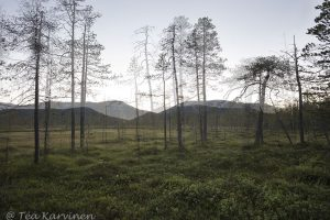 Photo of the week 27 - Pyhä-Luosto National Park