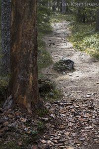 photo of the week 21 – Pyhä-Häkki National park