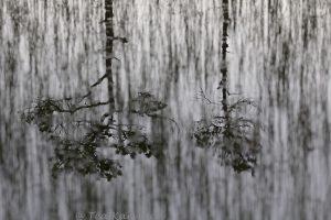 photo of the week 25 - Kauhaneva-Pohjankangas National Park