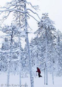 photo of the week 3 - Rovaniemi, Lapland