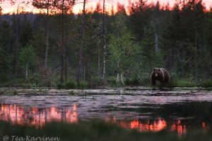 3296 – In a bearcountry