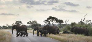 7375 – In Kruger National Park, South-Africa