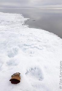 2774 - Polar bear tracks