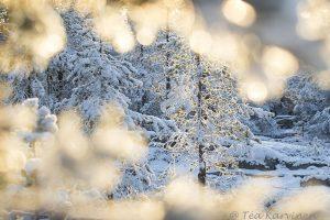 Photo of the week 46 - Ounasvaara, Rovaniemi