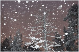 Photo of the week 51 – Snowing at Ounasvaara, Rovaniemi