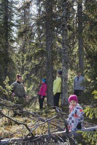 7949 – Puuhengitystä Mirja Nylander metsä forest puu tree
