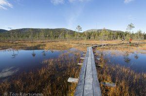 9050 – Tunturiaapa - keidassuo, swamp