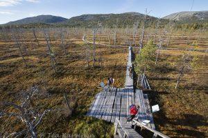 9064  – Tunturiaapa - keidassuo, swamp