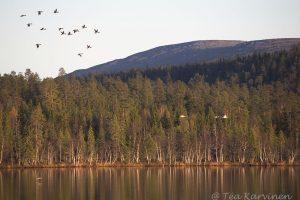 9182 – Lake Huttujärvi