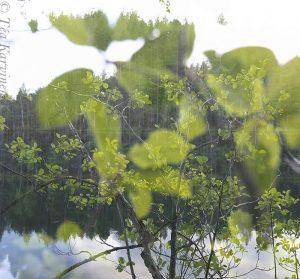 6955 – Valkealampi lake