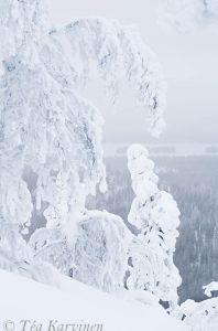 photo of the week 1 – (@ Kuusamo)