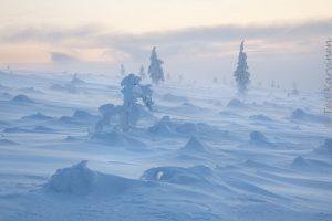 photo of the week 52 – (Urho Kekkonen National Park at Christmas)
