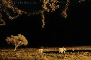 photo of the week 18 – Etosha National Park, Namibia