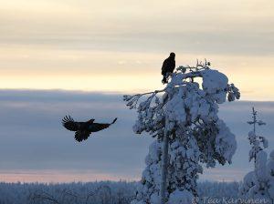 9676 – @ Oulanka, Kuusamo