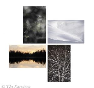 "One common word for all the 4 canvas prints is ""tree""."