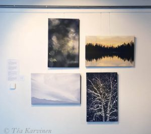 Kolin luontokeskus (Visitor's Center) Ukko – opening Feb. 2nd 2019. – Here are four new canvas prints. The common word or thing in all these 4 images is: TREE(s).