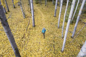 226 – Pitkälahti in the beginning of October