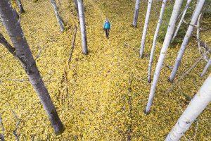 photo of the week 40 (Salamajärvi National Park)