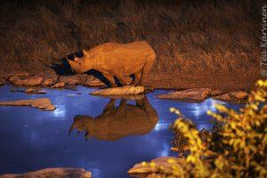 7151 – Elephants and rhinos, etc. come to eat at night here (Etosha National Park, Namibia)