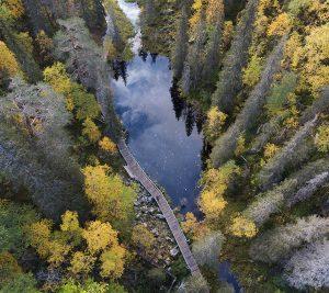 163 – Pyhä-Luosto National Park