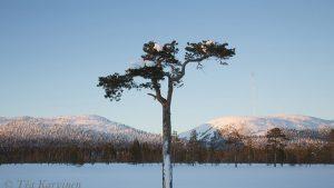 179 – Pyhä-Luosto National Park