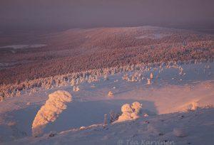 5772 – Pyhä-Luosto National Park
