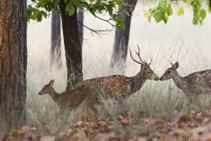 7480 – At Kanha National Park, India