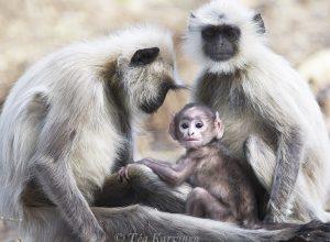 7831 – At Kanha National Park, India