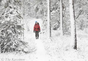 9539 – Pyhä-Luosto National Park in October
