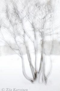 photo of the week 14 – Trees in Rovaniemi